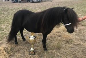 Lynn van stal de Riet geb 26-04-2017 Black diamond of sportview x Devely van de Hoek kleur zwart merrie veulenpremie, enterpremie, twenterpremie tweede premie